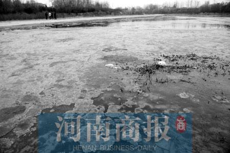 现在的西流湖一副破败的模样。郑州市政府出台措施,力争重现其往日的风采  河南商报记者 杨东华/摄