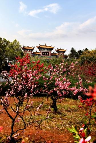 中国常德_2011第二届中国·常德桃花源旅游节启幕(组图)-搜狐滚动