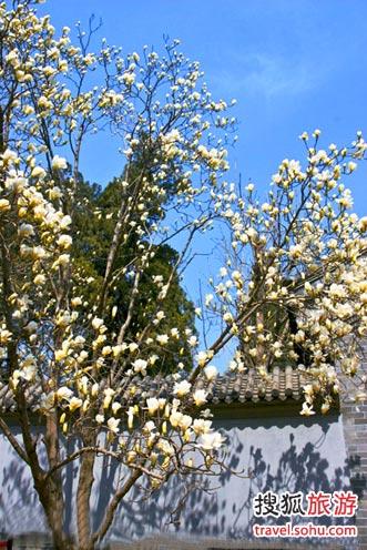 春花烂漫时 到京郊赏花去 北京旅游