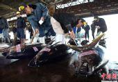 组图:日本震后20余天 盐釜鱼市重新开张