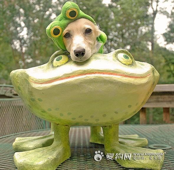 青蛙王子不是我,虽然我很温柔的! -把我整成这样 我还怎么在狗界混