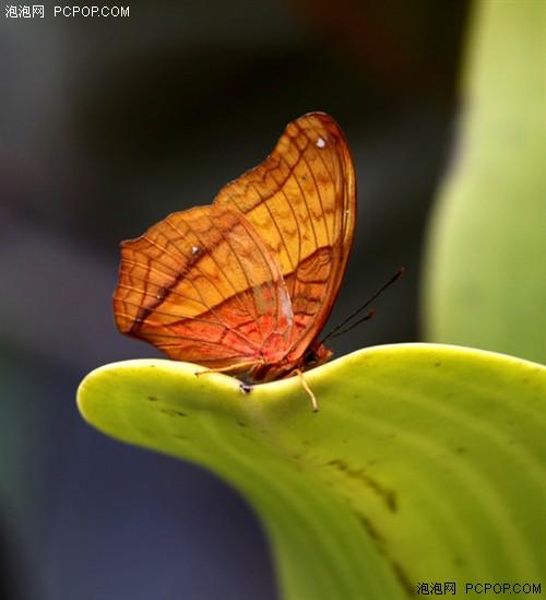 昆虫拍摄技巧及器材选择