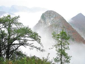 凌云茶山.图片