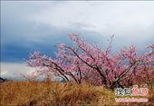 2012平谷桃花节赏花游玩全攻略(图)