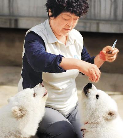 饲养员李黎正在喂两只北极熊食物.