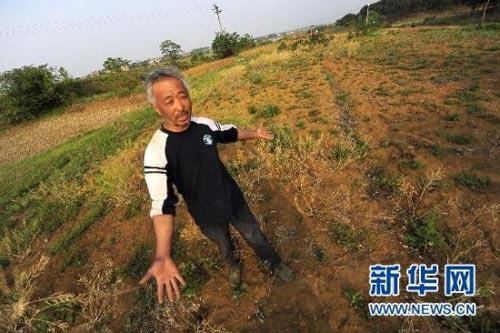湖北省孝昌县花西乡幸光村二组的黄胜华家里的油菜由于干旱几乎绝收(5月3日摄)。