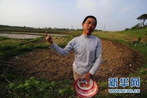 5月3日,湖北省孝昌县花西乡全民村6组的付梅清刚花了780元浇了家里的5亩田,准备育秧。