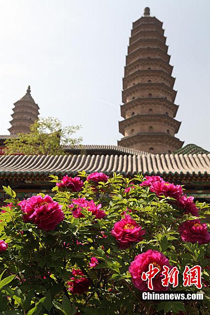 永祚寺(又称双塔寺)开幕,寺内200多个品种,共6000余株牡丹花竞相开放