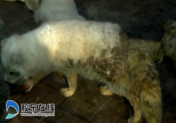 南山动物园动物脏如乞丐
