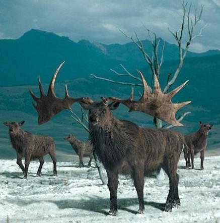4.灭绝动物复活