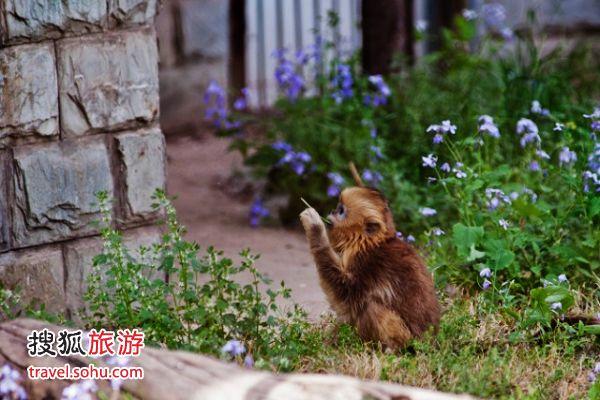 大兴野生动物园的小猴 来源:车车的幸福(搜狐博客)