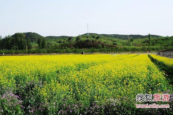 中天瀚海农业观光园的油菜花