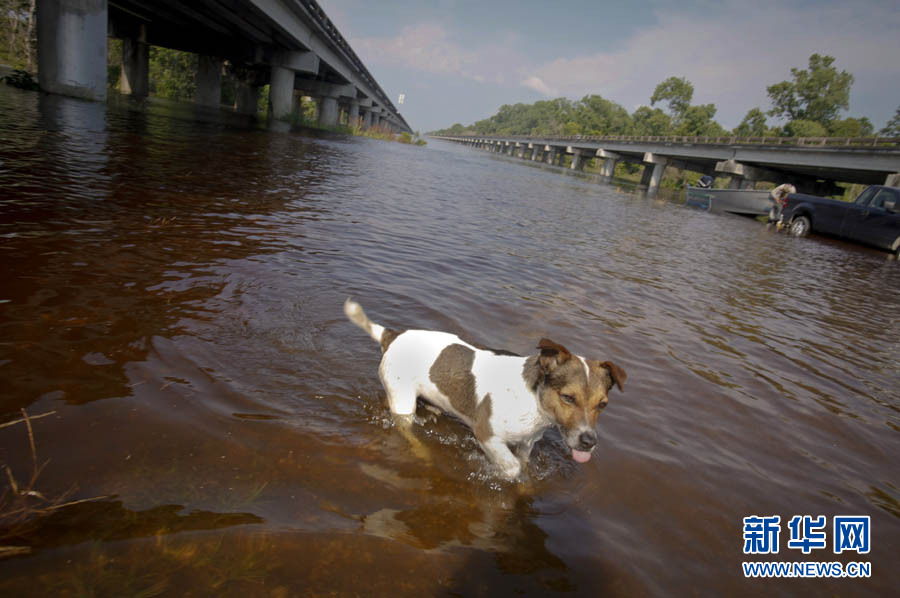 涉水而过_5月20日,在美国路易斯安那州,一条狗涉水而过.