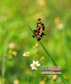 微距镜头下的生物百态——香港郊野公园