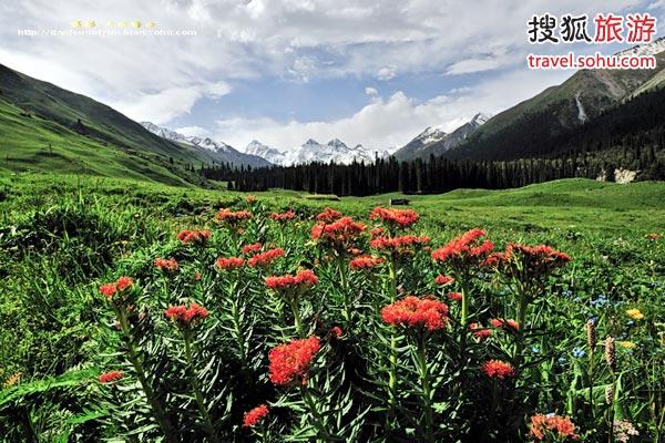 新疆伊犁旅游攻略