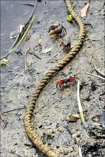 台湾成大团队调查淡水河流域底泥DEHP含量,5年内高出4倍。图片来源:台湾媒体