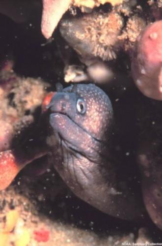 危险海洋动物:鳄鱼攻击大象(组图)