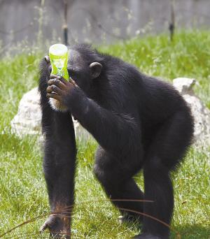 """动物园:开展""""食疗""""   据长春市动植物公园相关负责人介绍,当天气"""