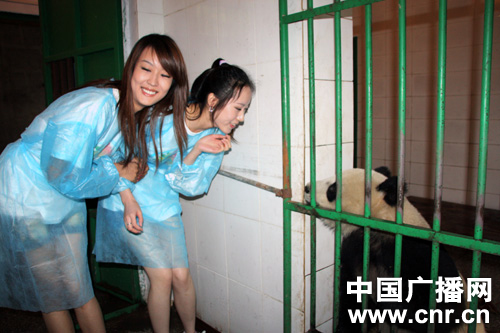 世界小姐亲近大熊猫