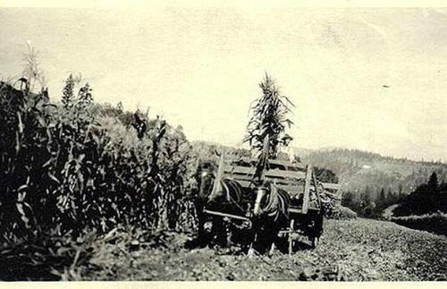 20年代照片_这是一张有关不明飞行物的最早照片之一,是20世纪20年代在美国的某个