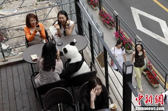 """6月末,韩国首尔一家以动物为主题的咖啡厅将""""大熊猫""""摆放在醒目位置招揽客人。中新社发 张宇 摄"""