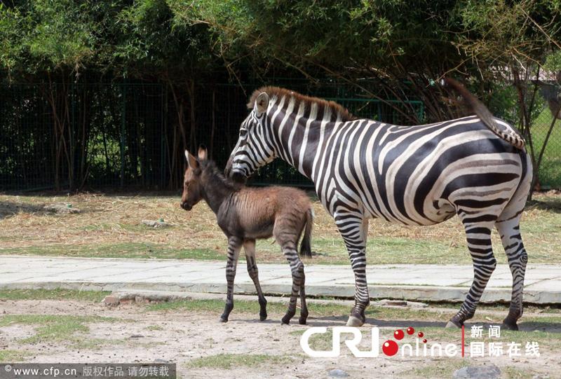 厦门海沧野生动物园诞生罕见