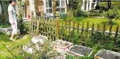 私人绿地28万兰花被带红袖章的当蔬菜拔了(图)