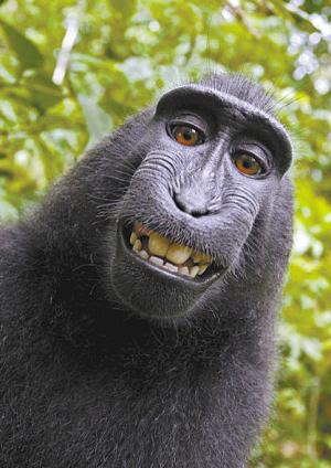 印尼猕猴捡到相机 狂拍数百张照片