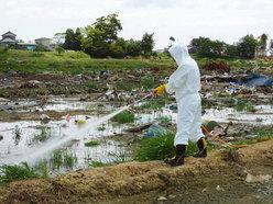 除虫人员在东日本大地震重灾区宫城县气仙沼市的农田内向孳生苍蝇的垃圾喷洒杀虫剂。摄于6月30日。(共同社)