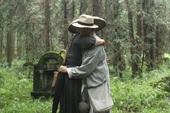图文:密林拥抱