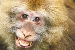 猴子笑啥模样(组图)
