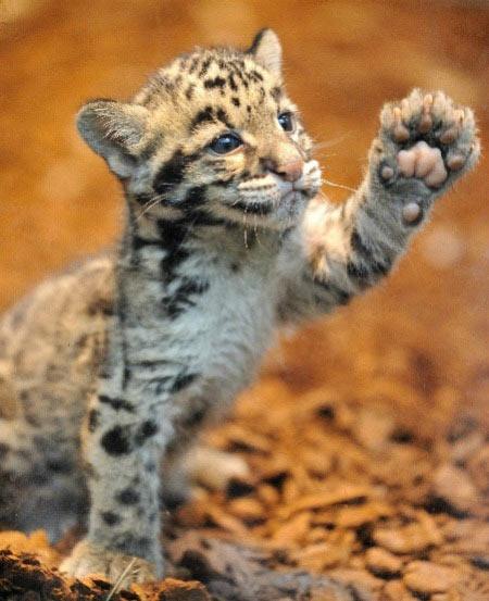 全球动物园20只最可爱的幼崽(组图)