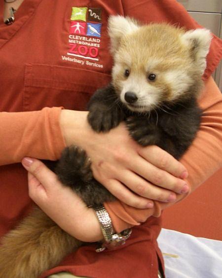 全球动物园20只最可爱的幼崽宝宝(组图)