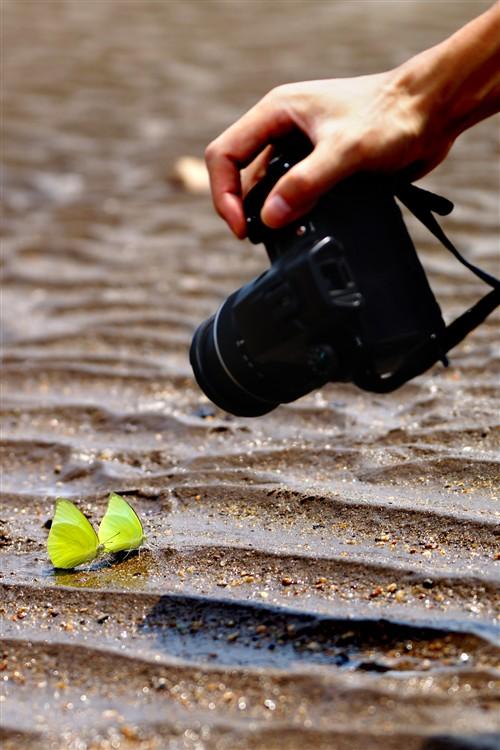沙滩上偶遇一对绿色蝴蝶,趁大家拍蝴蝶的时候,抓拍了这么一张