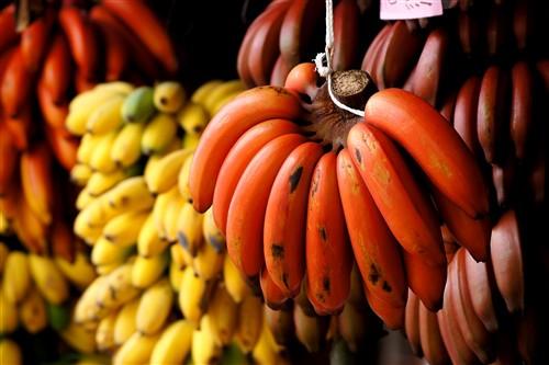 红色香蕉(普通模式)