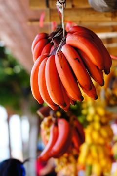 红色香蕉(照片模式:流行色彩);红色香蕉(照片模式:玩具相机)
