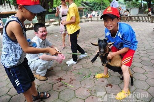 孩子们开心地在动物园里喂山羊.