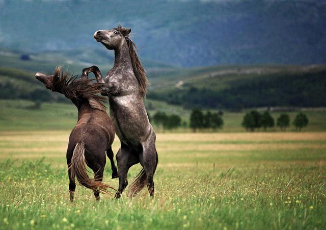 50张以马为主题的摄影作品(组图)