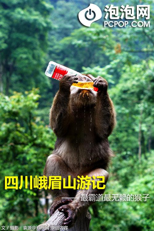 6月29日,趁着休假回家的功夫我头脑一热就带着朋友一起直奔峨眉而去,虽未能缕化成仙成为神仙眷女,但却见识了什么叫做真正的猴子。