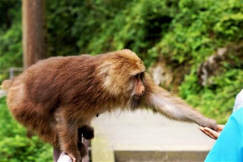 """猴子:""""这个看上去还不错。"""""""