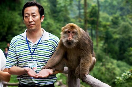 """猴子:""""又找我合影,真烦。"""""""