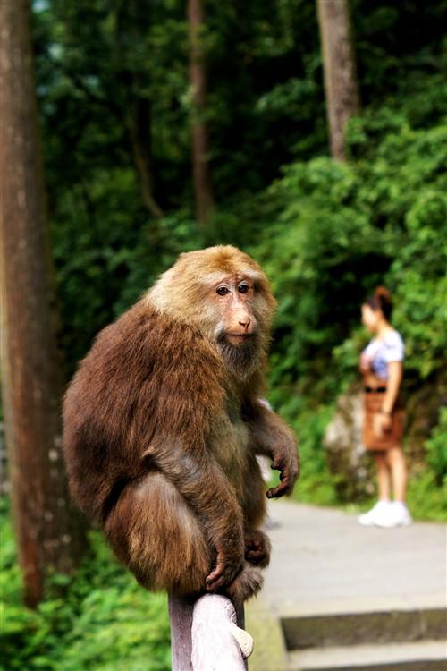 """猴子:""""嘿嘿,此路是我开,要想过此路,留下买路食。"""""""
