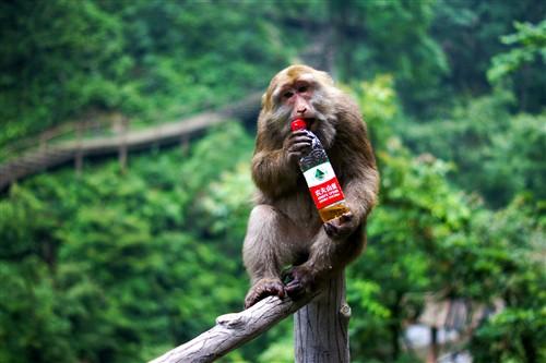 """猴子:""""这玩意儿怎么这么难开!"""""""