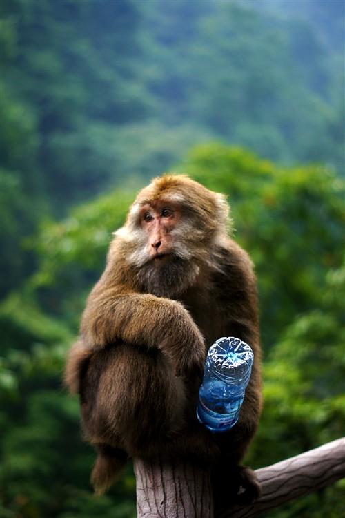 """猴子:""""今天心情不错。"""""""