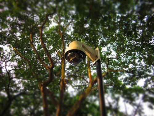 当看到路灯和旁边的鸟笼时,可以进行清晰的对焦选择,而周围都变得虚化,使得我们如置身童话王国一般。所有的景物都变得那么有趣和可爱。