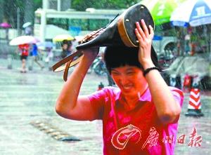 没带雨具出门的市民用手袋遮雨。 实习生苏俊杰 记者黄澄锋 摄