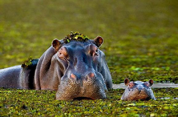 通过对动物生活细节的观察,也让我们更多的感受到了可爱动物们的人性