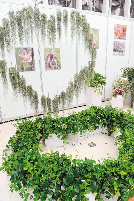 国际垂吊植物花卉展览开幕