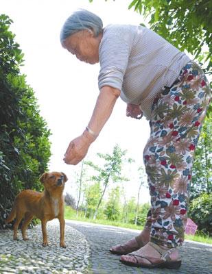 坚守小黄狗感动爱犬人士 拒绝被热心人领养