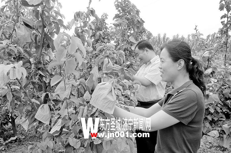 梁山县马营乡不断加大农业产业结构调整力度(